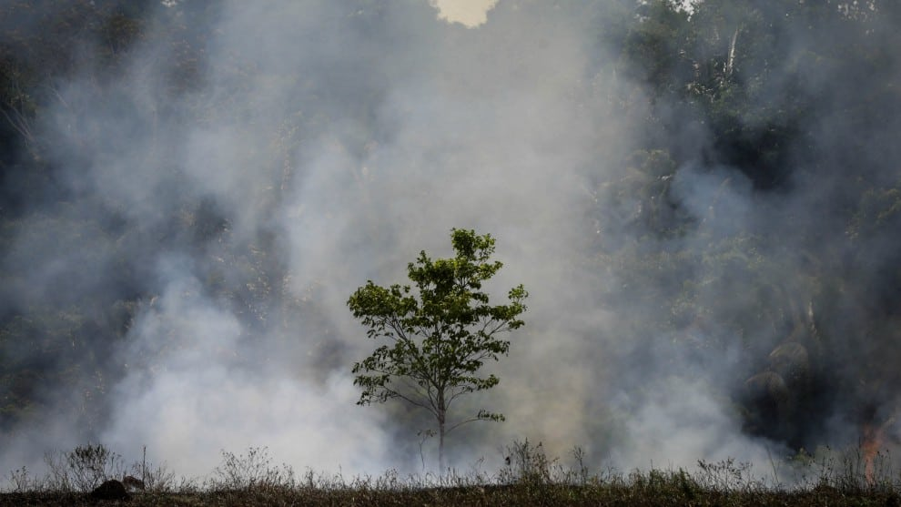 Criminales usan violencia para deforestar la Amazonía: Human Rights Watch