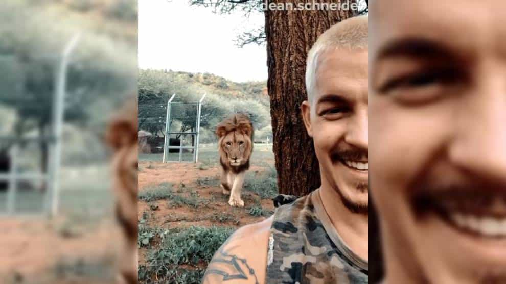 Video: La inesperada reacción de un león al creer que no lo ven